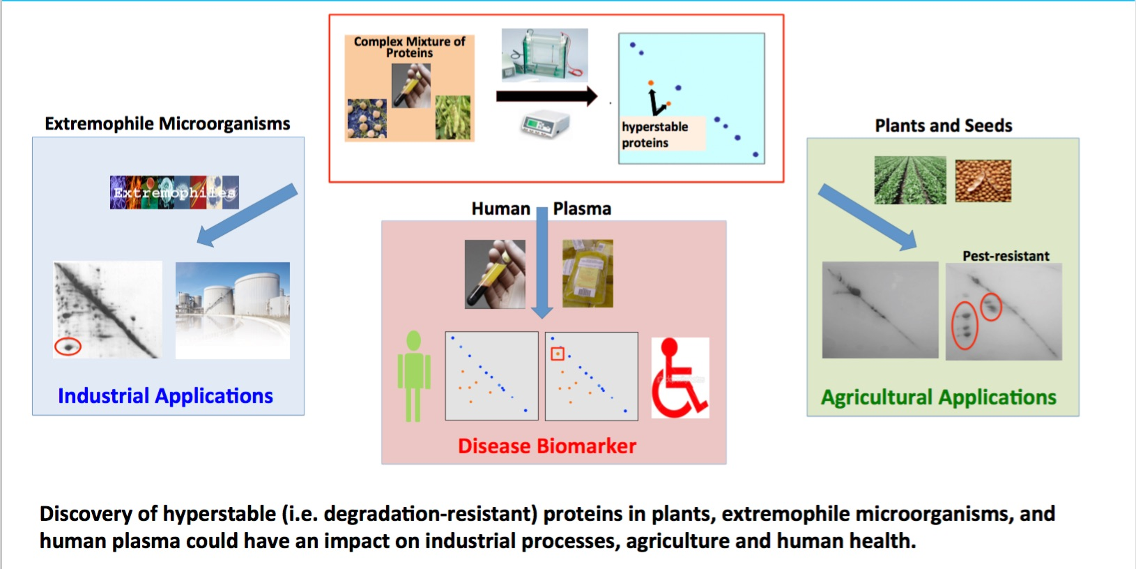 [Degradation-resistant Proteins:Biological, Disease, and Biotechnology Implications]
