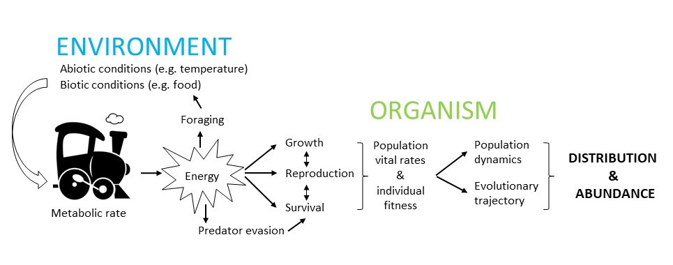 [Energetic Mechanisms for Coping with Environmental Change]