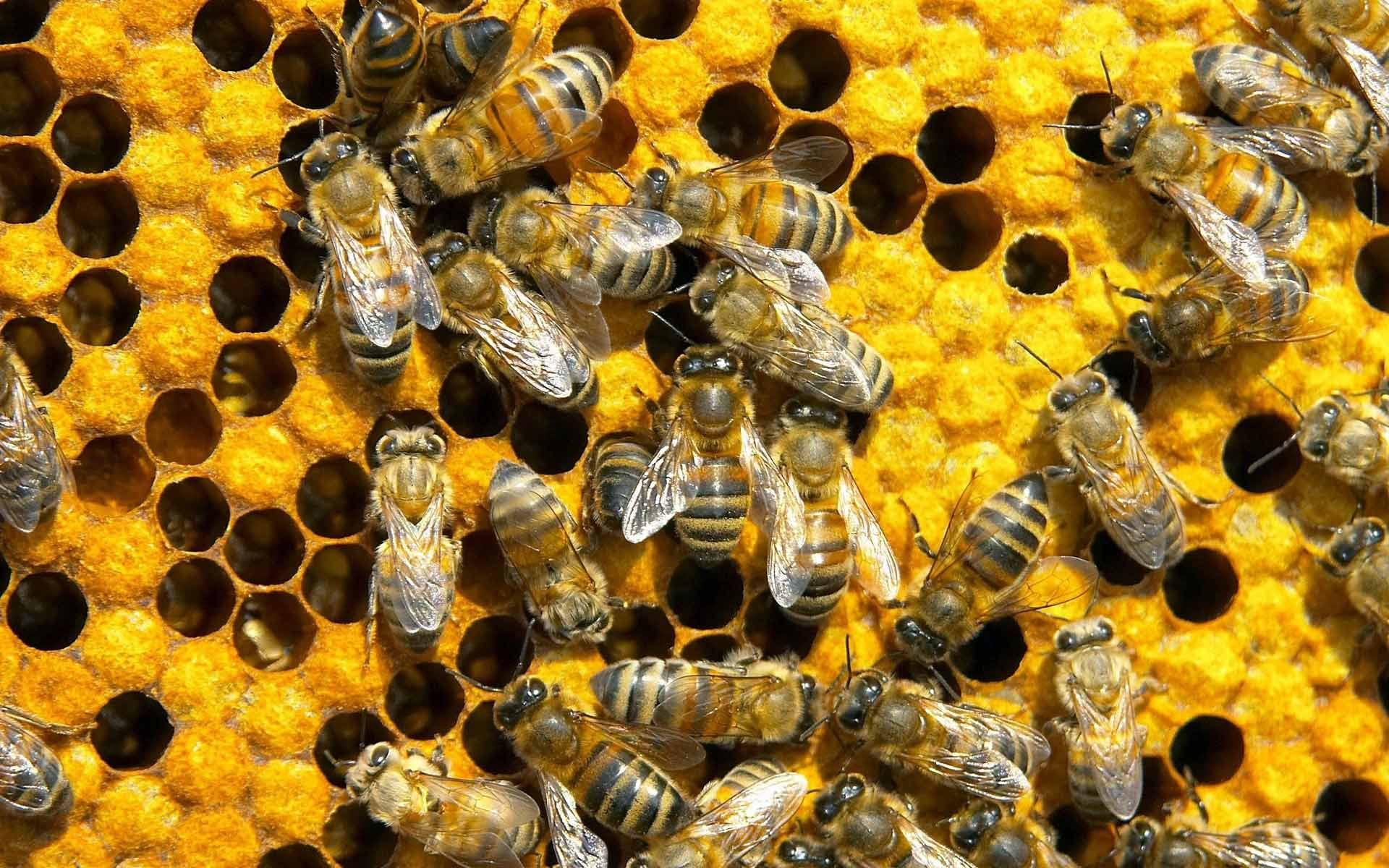 [Why Are Bees Sick? A Search for Synergistic Effects]