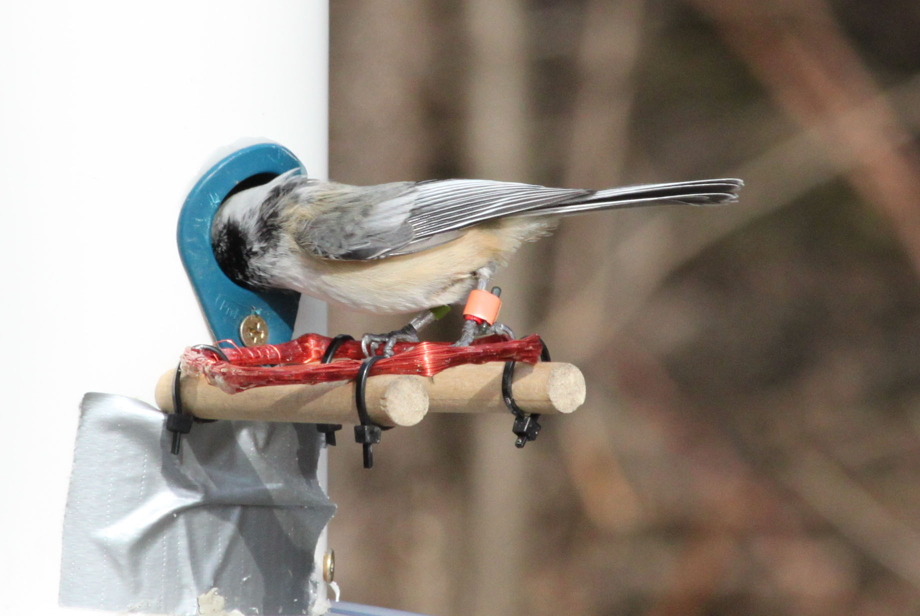"[""Smart Feeders"" and Optimal Foraging in Birds]"