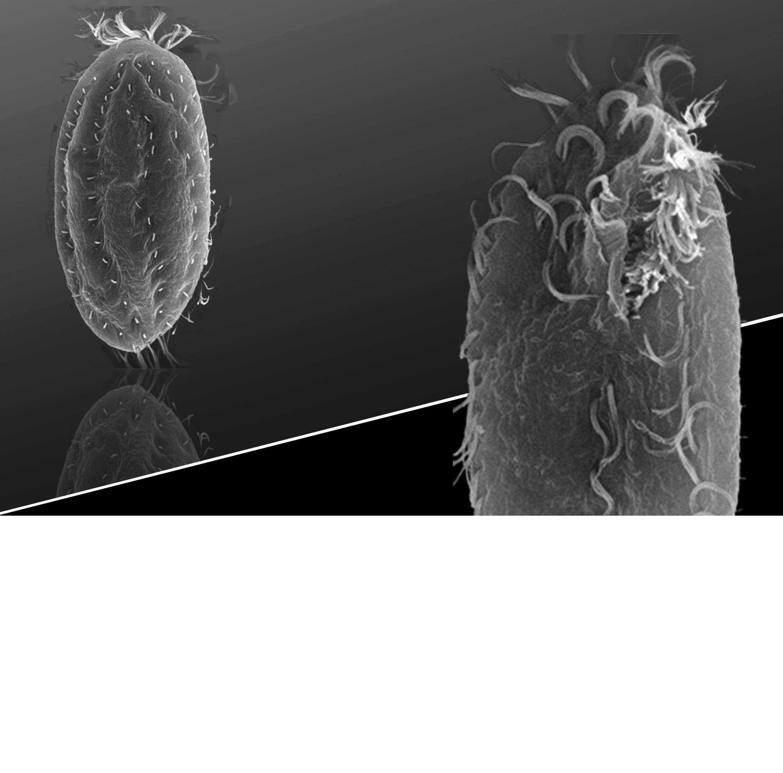 [RNA and Epigenetic Inheritance]